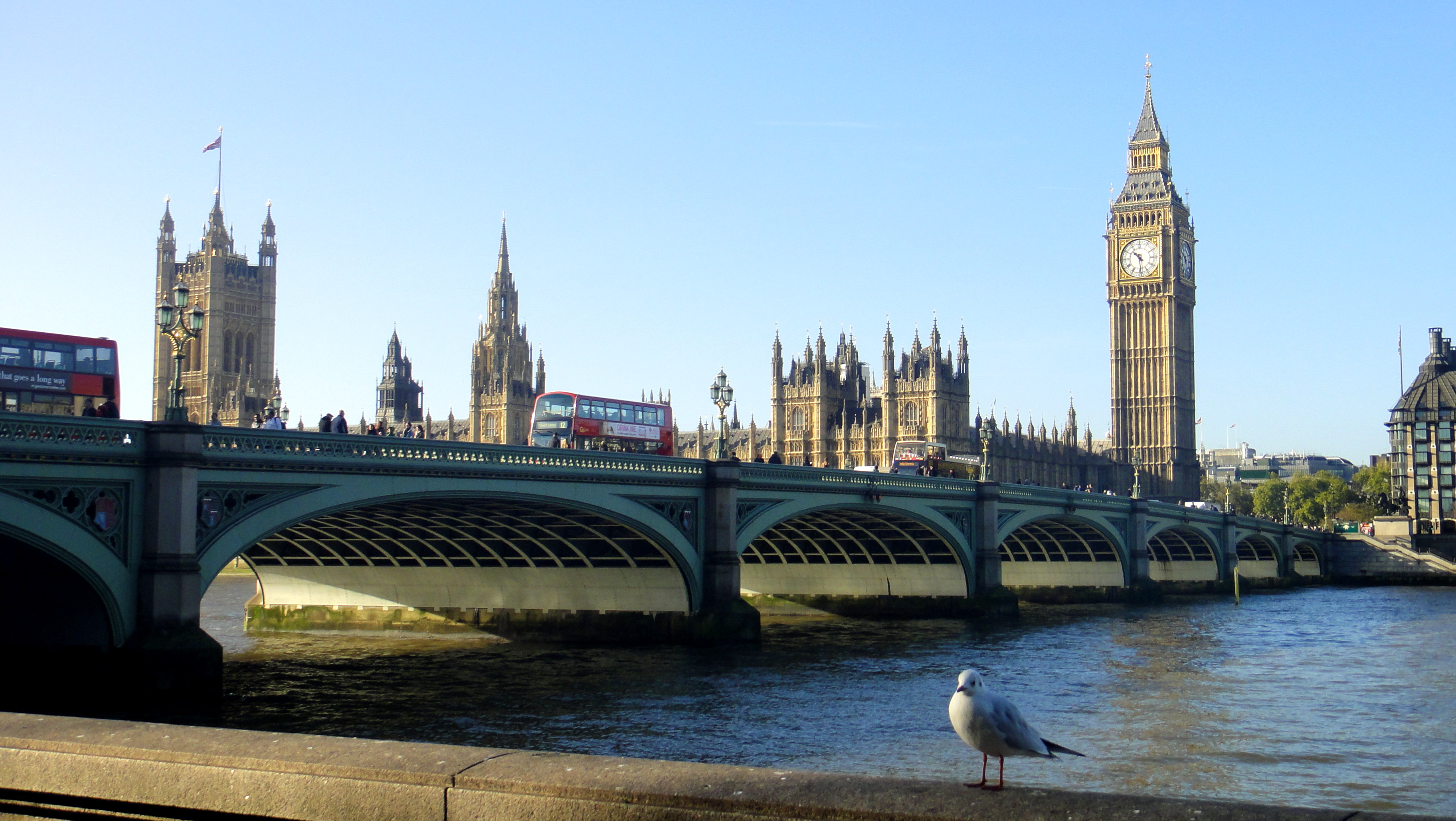 How To Save Money In London  Seagull Enjoying View From Southbank, London   Geeky