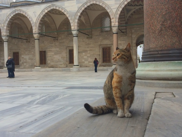 famous sights in Istanbul - cat istanbul