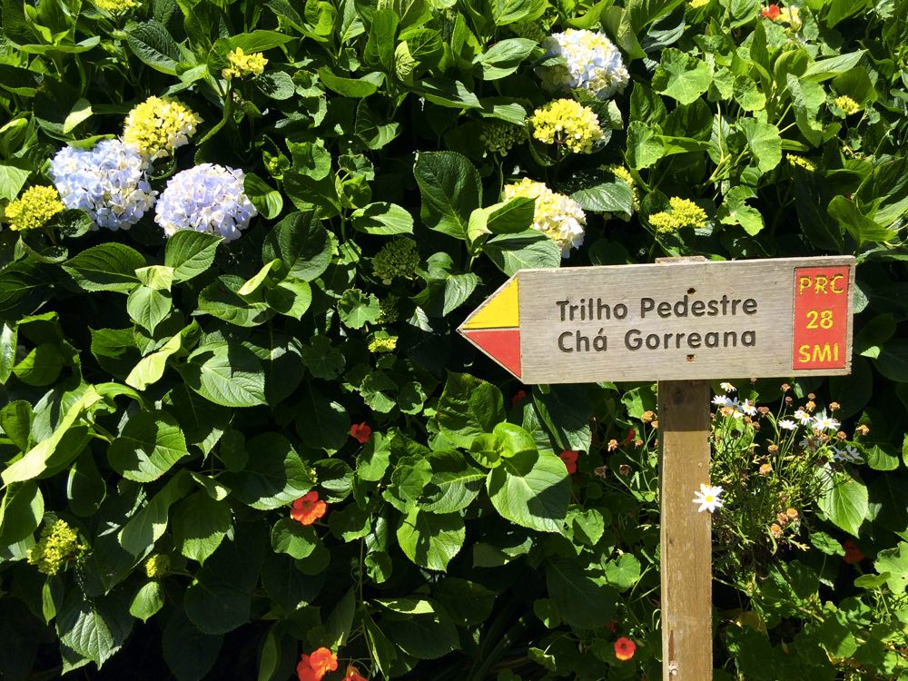 road trip itinerary of São Miguel island azores - Gorreana hiking trail