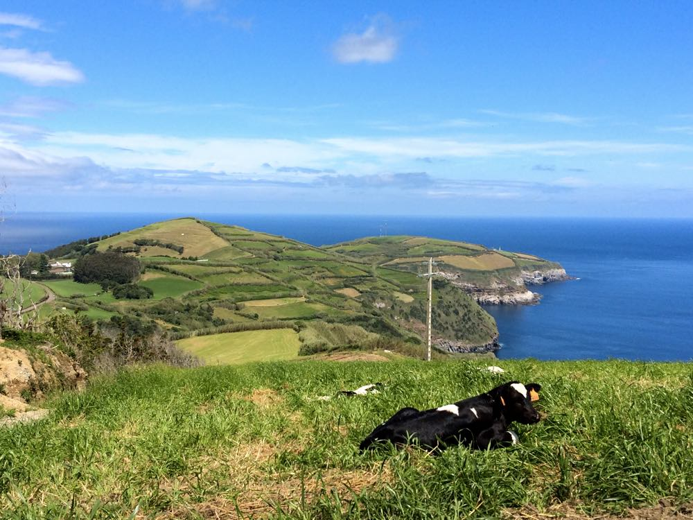 Frisian cow - why Azores the next big travel destination trend