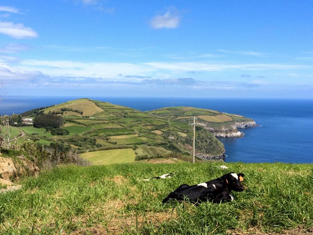 Frisian cow - why Azores the next big travel destination trend