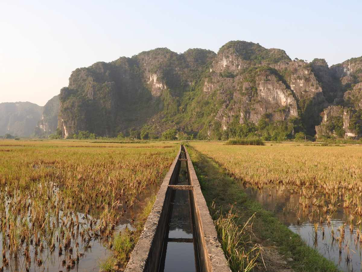 ninh binh travel guide rice paddy fields november