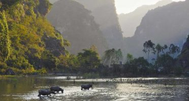 ninh binh travel guide scenery rice fields