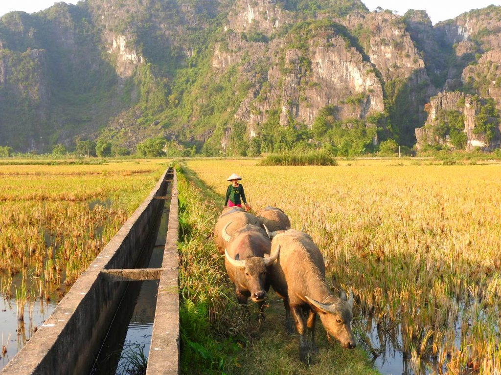The BEST Ninh Binh Itinerary - Explore Vietnam's Hidden Gem