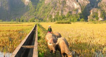 what to do in ninh binh itinerary tam coc paddy rice fields