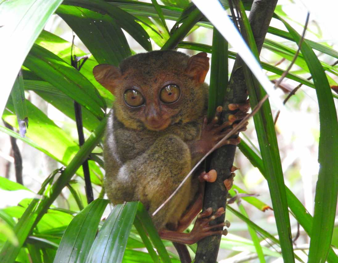 experiences bohol panglao philippines tarsier sanctuary