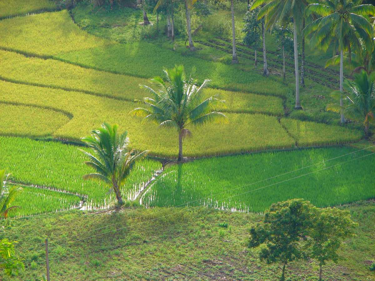 bohol travel guide budget itinerary paddy fields