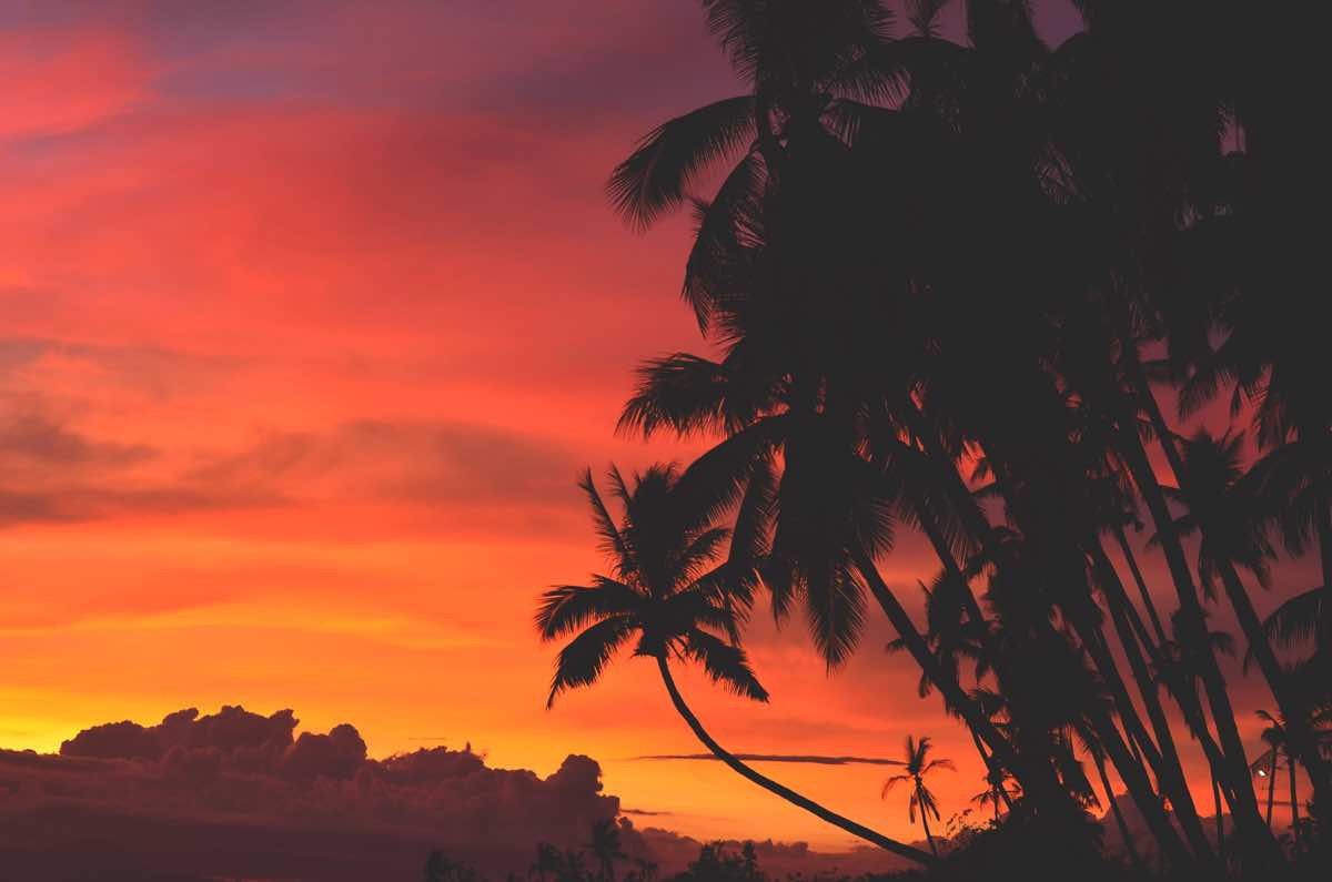 top tourist spots siquijor philippines palm trees sunset