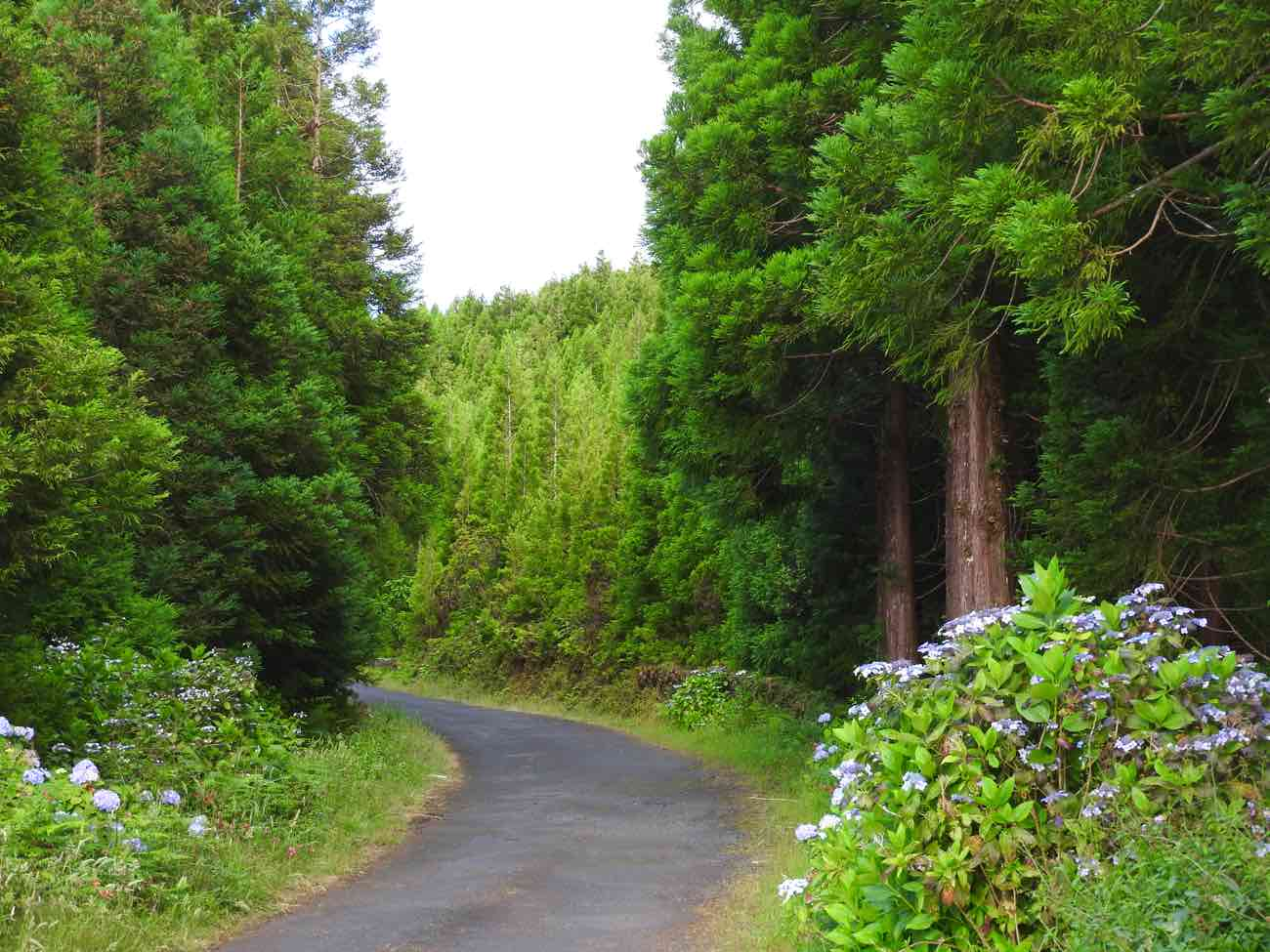 pico travel guide road green forest azores