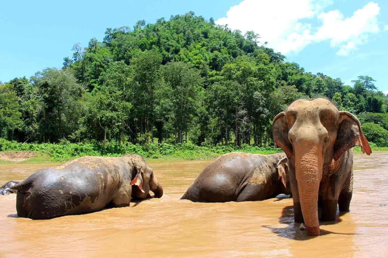 thailand itinerary 2 weeks chiang mai elephants