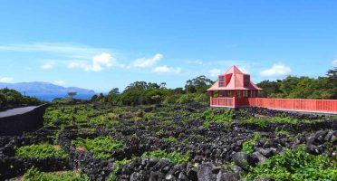 things to do in pico azores wine museum vineyards currais