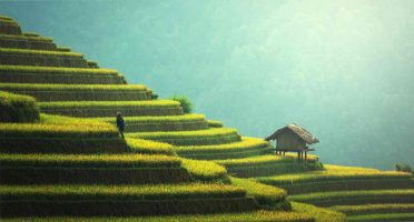 vietnam travel tips things to know before traveling vietnam rice fields terraced