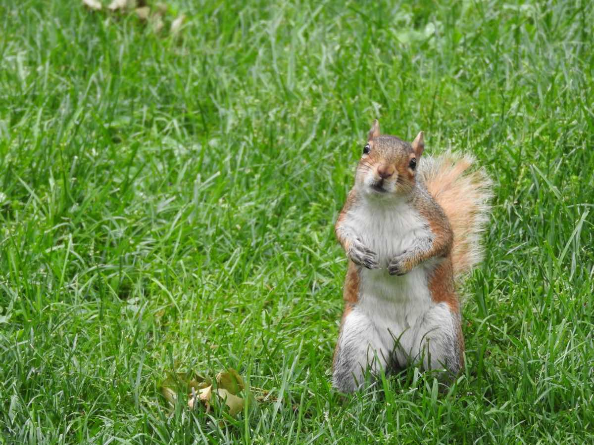 nyc-on-a-budget-squirrel-central-park