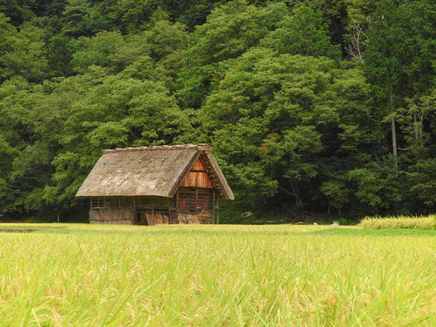japan itinerary 14 days shirakawago houses