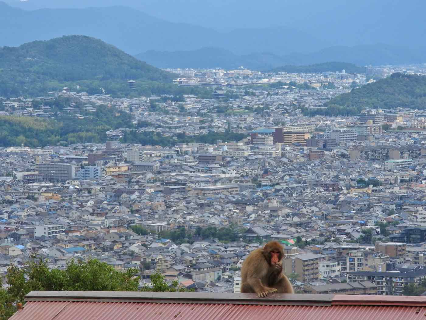 japan itinerary two weeks kyoto arashiyama monkey