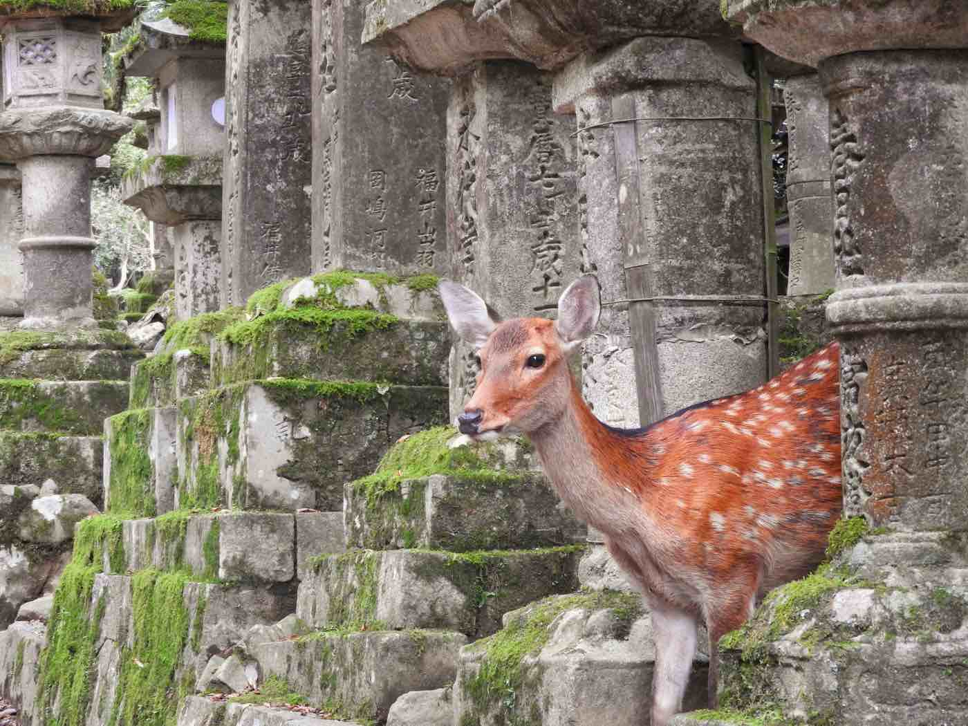 japan itinerary two weeks nara deer temples