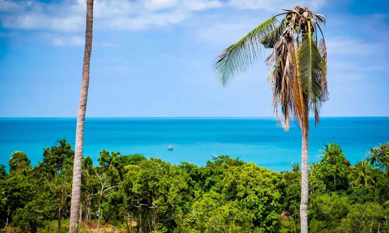 thailand island hopping koh samui palm trees