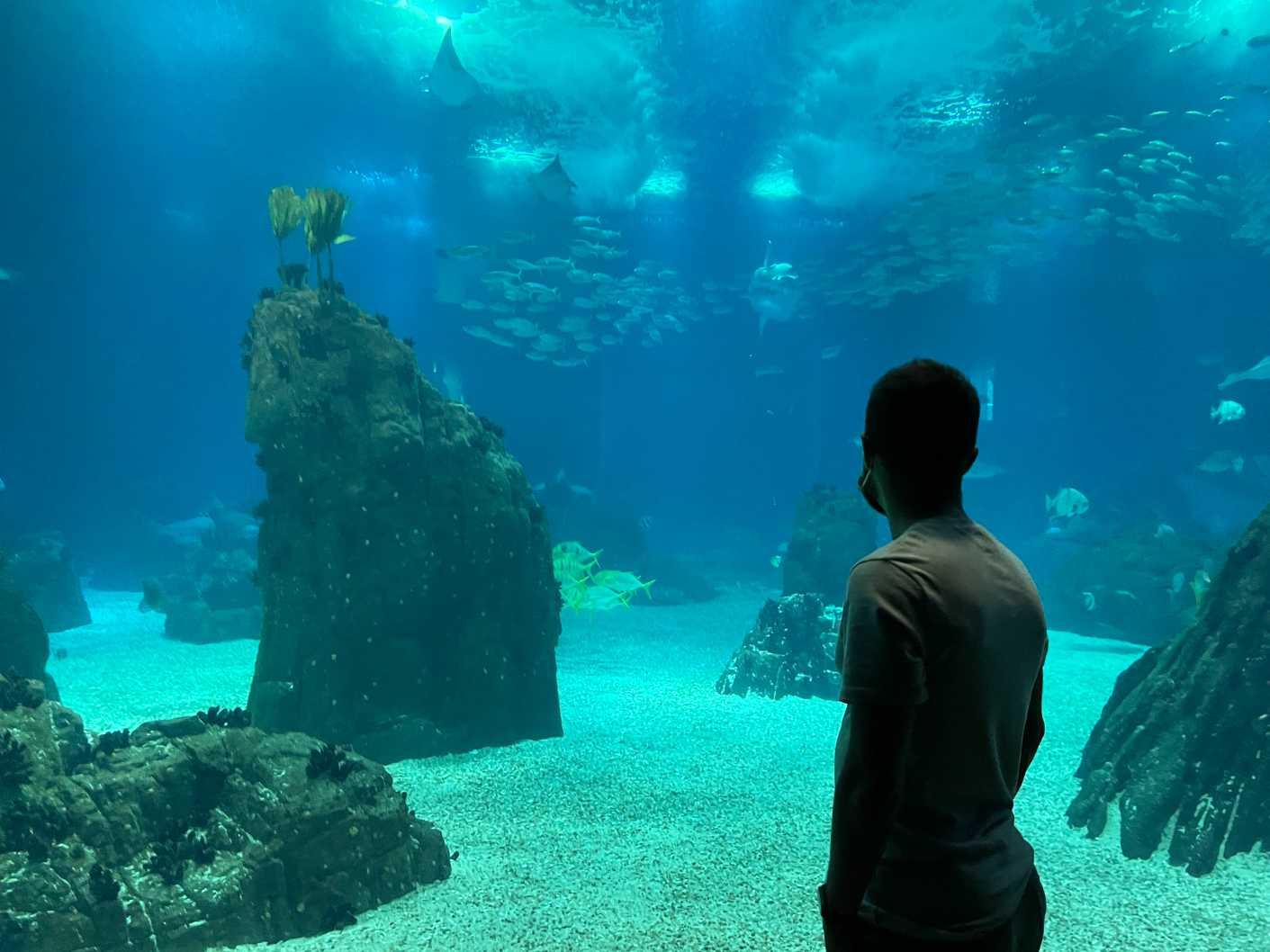 oceanario aquarium lisbon
